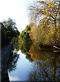 SO8554 : Worcester & Birmingham Canal - Worcester by Chris Allen