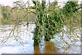 J3067 : The River Lagan in flood, Drumbeg, Dunmurry - November 2014(4) by Albert Bridge