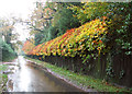 TM1999 : Colourful hedge beside Long Lane by Evelyn Simak