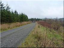 SN8651 : Forest track on Cefn Crug by Richard Law