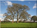 ST6376 : Trees, Oldbury Court by Derek Harper