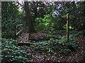 SU9762 : Wooden Bridge in the Little Heath woods by Alan Hunt
