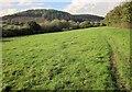 SX8174 : Field path from Liverton by Derek Harper