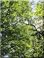 SU3170 : Canopy, Stew Close by Derek Harper