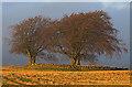 NT0498 : Carleith Cairn by William Starkey