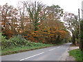 TG2913 : Norwich Road past Hospital Plantation by Evelyn Simak