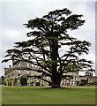 SU1030 : Cedar, Wilton by Stephen Richards