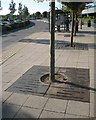 SP3880 : Semi-mature tree planting, University Hospital bus stands, Walsgrave, Coventry by Robin Stott