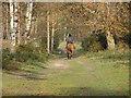 SU9457 : Horserider, Sheets Heath by Alan Hunt
