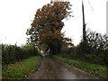 TM1480 : Burston Road, Thelveton by Adrian Cable