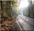 TF8520 : Autumn colours beside the A1065 road by Evelyn Simak