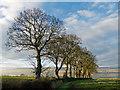 NH6060 : Field boundary near Findon Mains by Julian Paren