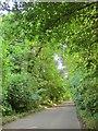 SU2667 : Road through Cobham Frith by Derek Harper