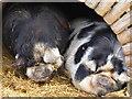 SX8274 : Trago Mills - snuggle up! by Chris Allen