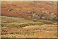 NY5604 : Stream grooves and dry stone wall by Trevor Littlewood