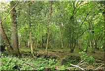 SX5360 : Cann Wood by Derek Harper
