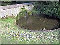 SK5453 : Crocus at the Stew Pond by Trevor Rickard