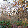 TQ8288 : Pathway in Pound Wood, Daws Heath by Roger Jones