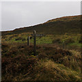 NC2312 : Lohinver 19k, a finger post on the A835 by Ian S