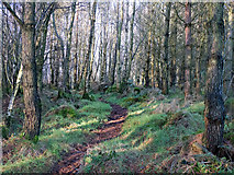 NH7359 : Footpath in Flowerburn Wood by Julian Paren