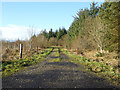 NY4975 : Track on the edge of Kershope Forest by Oliver Dixon
