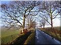 NY5070 : Tree-lined road near Dorryfield Farm by Oliver Dixon