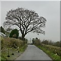 SD5376 : Tree beside Vicarage Lane by David Lally