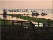 TL5392 : Near Suspension Bridge - The Ouse Washes, Welney by Richard Humphrey