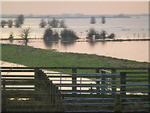 TL5392 : Cattle corral and flooding - The Ouse Washes near Welney by Richard Humphrey