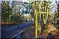 TQ2039 : Rusper Road by Robin Webster