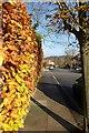 TQ4070 : Hedge along Garden Road by DS Pugh