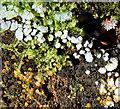 J4774 : Fungi, Kiltonga, Newtownards - December 2014(2) by Albert Bridge