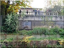 TQ2783 : Visitors to London Zoo watching a warthog by Christine Johnstone
