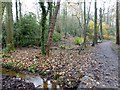 SJ4333 : Path in Yell Wood by David Smith