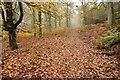 SO6009 : Gloucestershire Way, Nagshead Plantation by Philip Halling