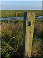 TF6329 : Disused gate post on top of the sea bank by Mat Fascione