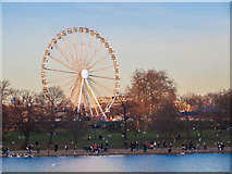 TQ2780 : Big Wheel across the Serpentine by Chris Denny
