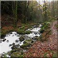 NY2125 : Comb Beck, Thornthwaite Forest by Graham Robson