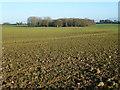 TF8925 : Farmland near East Raynham, Norfolk by Richard Humphrey