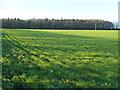 TF8924 : Webb's Covert and farmland near East Raynham, Norfolk by Richard Humphrey