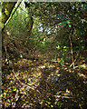 SP0574 : Looking up a holloway, Swan's Hill by Robin Stott
