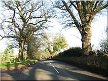 TG0718 : View along Lyng Road by Evelyn Simak