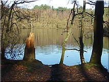 SU8265 : Heath Lake, Wokingham by Alan Hunt
