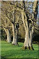SP1424 : Tree trunks, Eyford Park by Philip Halling