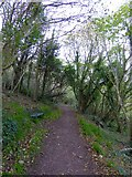 SX9363 : Footpath through woodland in the Ilsham Valley by David Smith