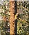 SX9265 : Squirrel, Tessier Gardens by Derek Harper