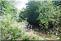 SE3357 : River Nidd, Nidd Gorge by N Chadwick