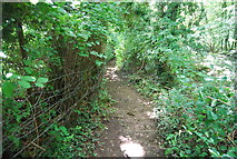 SE3357 : Footpath out of the Nidd Gorge by N Chadwick