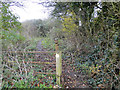 TG0410 : Ill-maintained footpath by Adrian S Pye