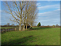 SU9960 : Paddock near Wapshott Farm by Alan Hunt